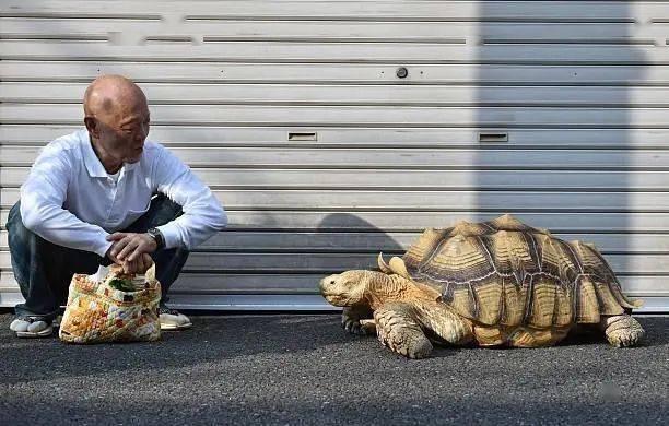 Ông lão người Nhật nuôi con rùa nặng 70kg, quãng đường 5 phút đi mất 3 tiếng: Sống chậm lại, cuộc đời quả thực đáng yêu hơn bạn nghĩ - Ảnh 13.