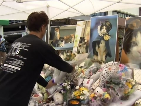 Chỉ nhờ một cô mèo hoang, công ty Nhật Bản lãi to 280 tỷ, thoát khỏi cảnh phá sản trong gang tấc - Ảnh 14.