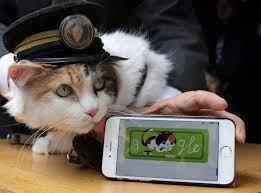 Chỉ nhờ một cô mèo hoang, công ty Nhật Bản lãi to 280 tỷ, thoát khỏi cảnh phá sản trong gang tấc - Ảnh 4.