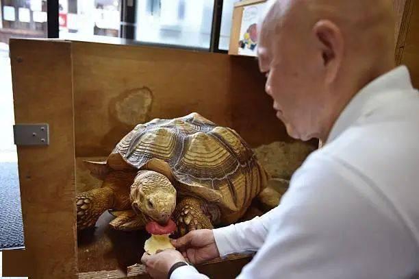 Ông lão người Nhật nuôi con rùa nặng 70kg, quãng đường 5 phút đi mất 3 tiếng: Sống chậm lại, cuộc đời quả thực đáng yêu hơn bạn nghĩ - Ảnh 7.