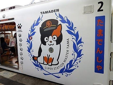 Chỉ nhờ một cô mèo hoang, công ty Nhật Bản lãi to 280 tỷ, thoát khỏi cảnh phá sản trong gang tấc - Ảnh 8.