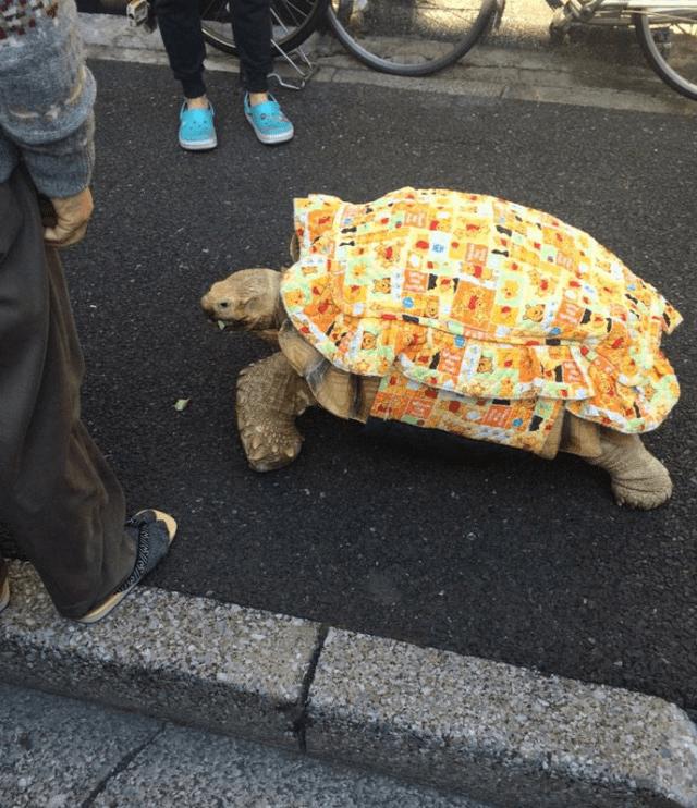 Ông lão người Nhật nuôi con rùa nặng 70kg, quãng đường 5 phút đi mất 3 tiếng: Sống chậm lại, cuộc đời quả thực đáng yêu hơn bạn nghĩ - Ảnh 10.