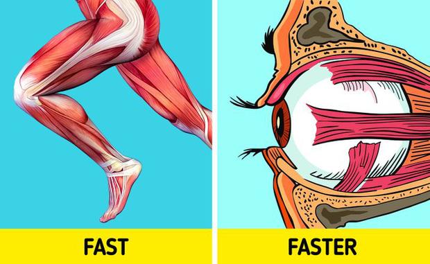 10 điều kỳ diệu mà cơ thể chúng ta có thể làm được, khiến bạn phải thừa nhận rằng thân thể mình chính là cỗ máy đỉnh cao nhất - Ảnh 7.