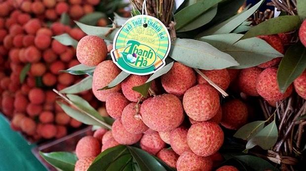 Vải thiều Việt Nam được nhiều quốc gia mê tít: Xuất khẩu hàng nghìn tấn, giá bán có thể lên tới 550k/kg - Ảnh 8.