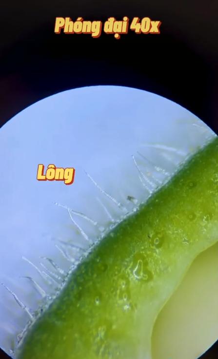 Kết quả đáng kinh ngạc khi soi quả đậu bắp dưới kính hiển vi và 4 đối tượng được khuyến cáo KHÔNG được ăn đậu bắp kẻo rước bệnh - Ảnh 3.