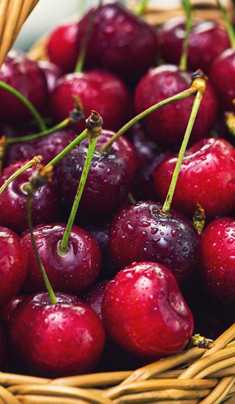 Đừng bao giờ phạm phải sai lầm này khi ăn quả cherry vì có thể khiến bạn ngộ độc, thậm chí tử vong - Ảnh 1.