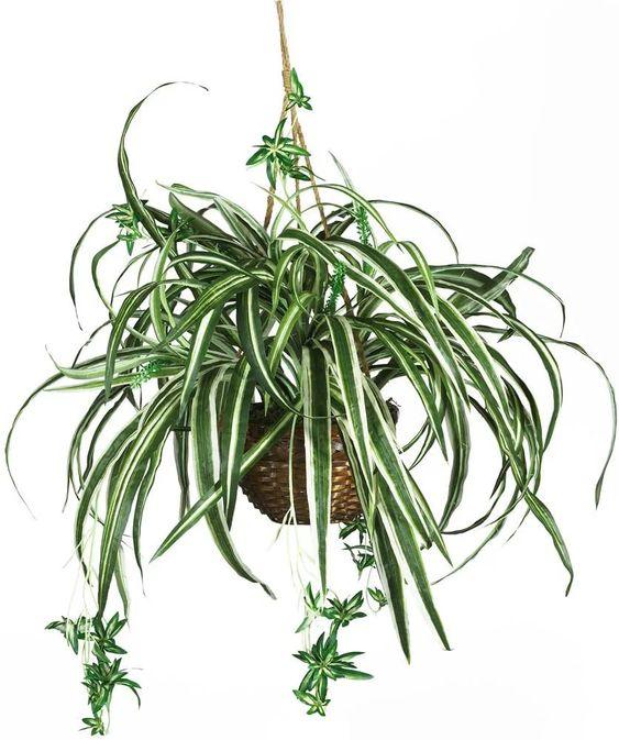 7 loại cây cảnh dù bỏ bê vẫn tươi tốt: Loại hấp thụ chất độc, loại mang may mắn cho gia chủ - Ảnh 1.