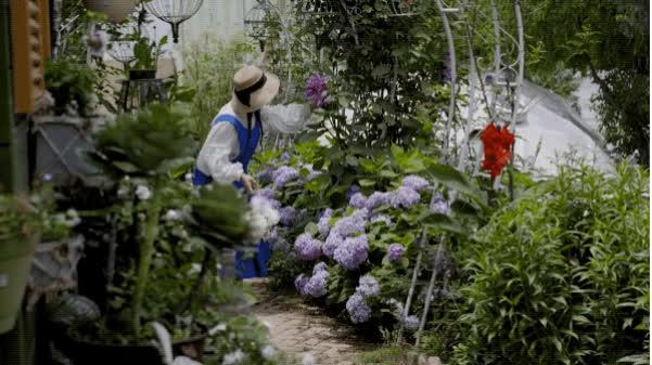 Người phụ nữ bỏ phố về quê để xây dựng vườn hoa 1500m2 đẹp nhất Trung Quốc: Nửa đời người dành cho gia đình, nửa đời sau, hãy dành cho chính mình - Ảnh 16.