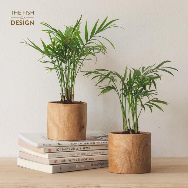 6 loại cây hoan hỉ hợp trồng trong nhà, không cần ánh sáng trời lại mang tài lộc cho gia chủ - Ảnh 1.