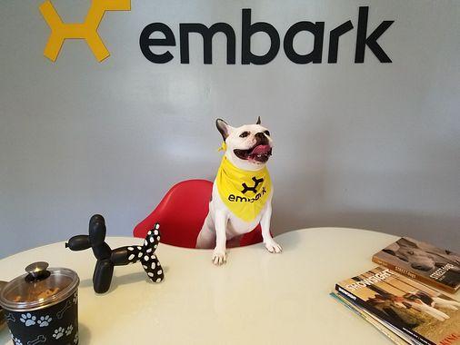 Công ty tìm cách tăng tuổi thọ cho chó được SoftBank đầu tư với mức định giá 700 triệu USD - Ảnh 1.