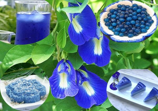 Sai lầm nguy hiểm bậc nhất khi pha trà hoa đậu biếc biến thức uống ngon lành này trở nên độc hại hoặc mất dinh dưỡng - Ảnh 1.