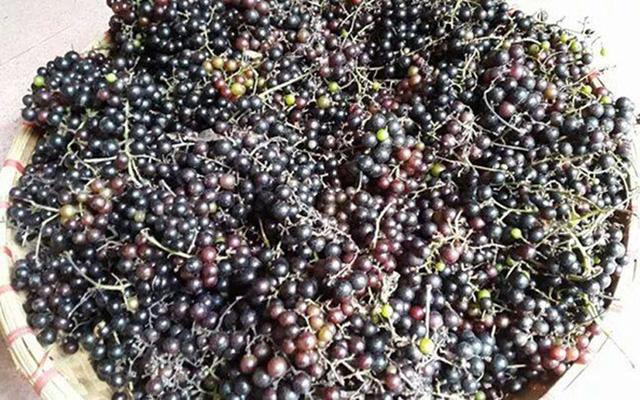 Loại nho mọc hoang ở bìa rừng Tây Bắc, ăn thì chua loét, giá chẳng kém cạnh nho nhập ngoại mà vẫn hút khách Hà thành - Ảnh 1.