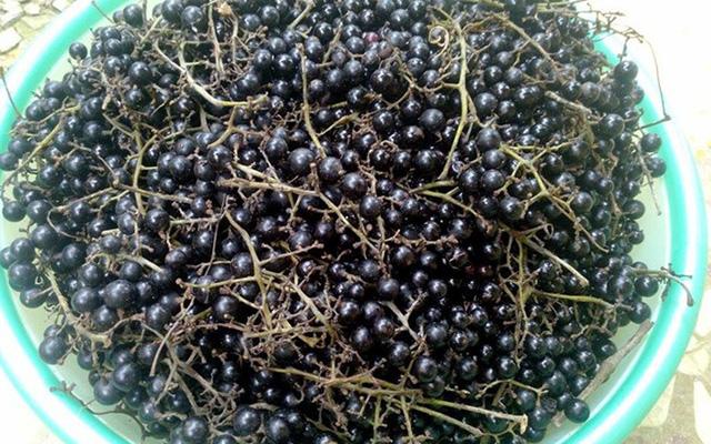 Loại nho mọc hoang ở bìa rừng Tây Bắc, ăn thì chua loét, giá chẳng kém cạnh nho nhập ngoại mà vẫn hút khách Hà thành - Ảnh 4.