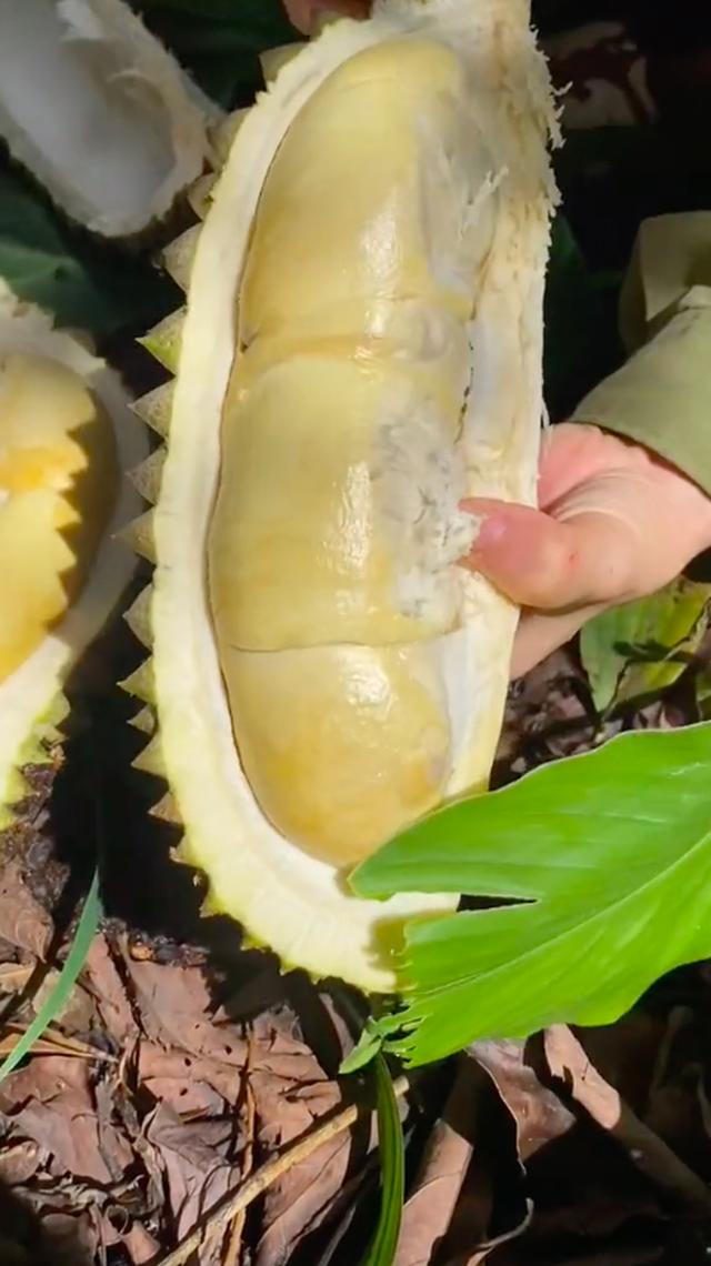 Bỏ Sài Gòn về quê làm vườn, cô nàng gây sốt với loạt clip viral: Sầu riêng, bơ trĩu quả, xem mà không thể kìm lòng! - Ảnh 9.