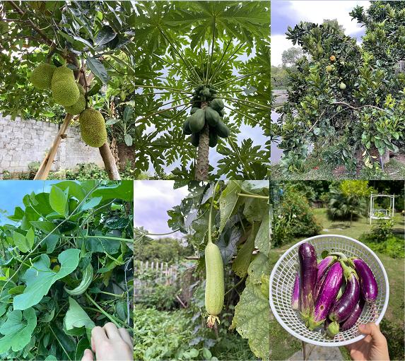 Nhà vườn 5.000m2 tuyệt đẹp ở ven đô Hà Nội: Không gian sống đơn giản, gần gũi với thiên nhiên nhưng mất ít công chăm sóc, để nhà thực sự là nơi nghỉ ngơi, thư giãn - Ảnh 10.