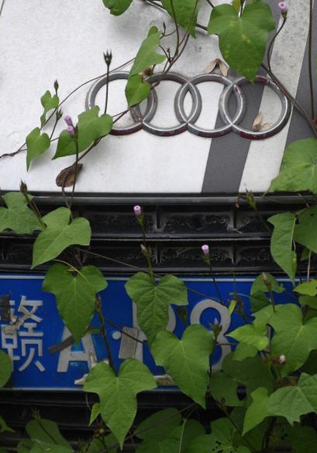 Xót xa toàn siêu xe, xe siêu sang tại nghĩa địa ô tô Trung Quốc: Rolls-Royce, Porsche, Corvette vứt cả đống, từ từ mục nát - Ảnh 6.