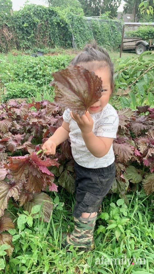 Khu vườn của mẹ Việt sai trĩu rau củ với kích thước khủng - Ảnh 20.