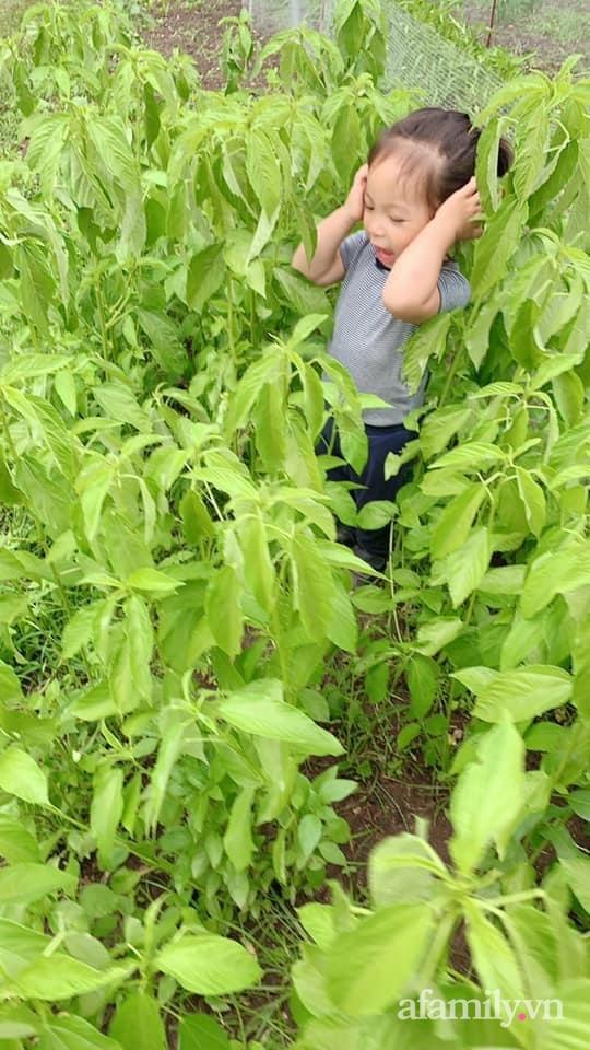 Khu vườn của mẹ Việt sai trĩu rau củ với kích thước khủng - Ảnh 22.
