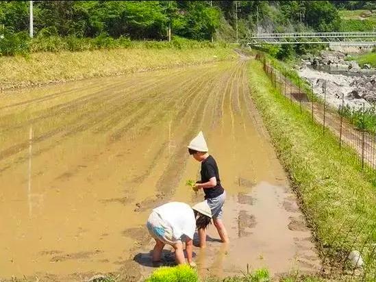 Bỏ việc về quê, nuôi cá và trồng thêm rau: Cuộc sống thảnh thơi, như mơ của đôi vợ chồng khiến nhiều người phát cuồng - Ảnh 11.