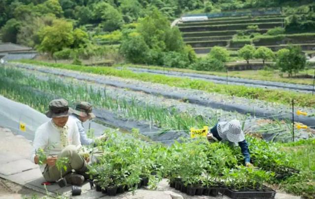 Bỏ việc về quê, nuôi cá và trồng thêm rau: Cuộc sống thảnh thơi, như mơ của đôi vợ chồng khiến nhiều người phát cuồng - Ảnh 21.