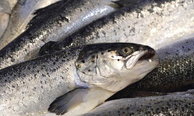 5 loại cá này chính là ổ chứa formaldehyde và kim loại nặng, dù giá rẻ bạn cũng không nên mua về ăn - Ảnh 1.