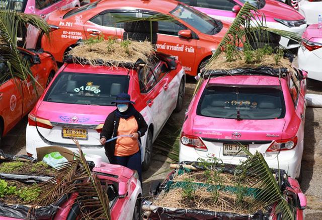 Bị bỏ không vì Covid, hàng nghìn taxi ở Thái Lan biến thành... vườn rau cứu đói tài xế - Ảnh 4.
