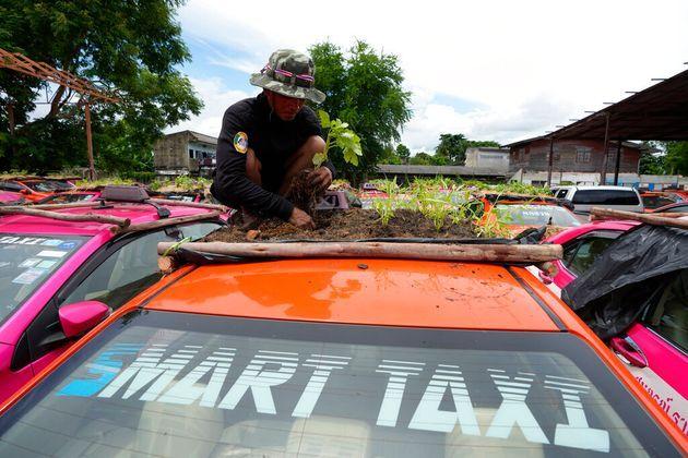 Bị bỏ không vì Covid, hàng nghìn taxi ở Thái Lan biến thành... vườn rau cứu đói tài xế - Ảnh 5.