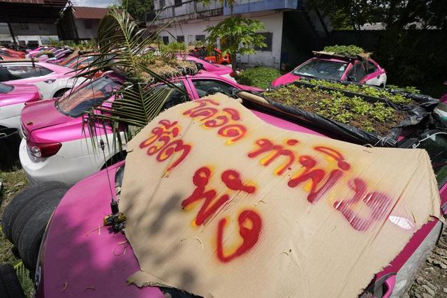 Bị bỏ không vì Covid, hàng nghìn taxi ở Thái Lan biến thành... vườn rau cứu đói tài xế - Ảnh 6.