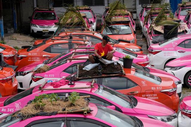 Bị bỏ không vì Covid, hàng nghìn taxi ở Thái Lan biến thành... vườn rau cứu đói tài xế - Ảnh 7.
