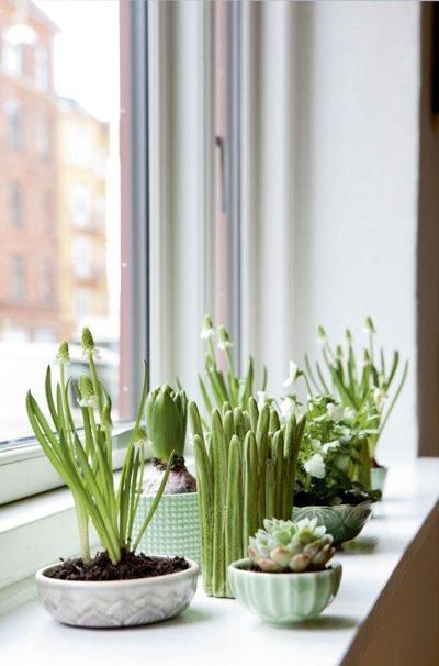 Nếu trong nhà có bệ cửa sổ rộng, bạn nên bố trí cây ở đó để chúng hấp thụ ánh sáng tự nhiên.