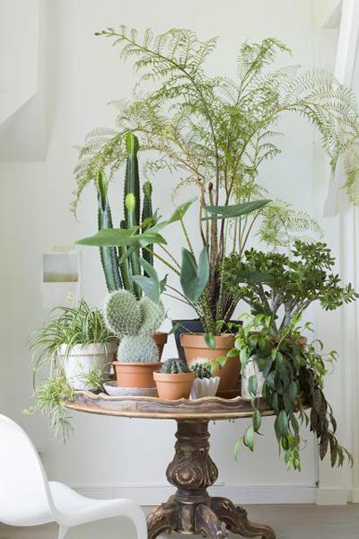Chủ nhà lựa nhiều loại cây với các độ cao khác nhau tạo thành mảng sinh động cho căn phòng.