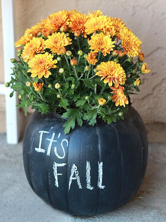 Bí ngô và hoa cúc là hai biểu tượng gần gũi nhất của mùa thu.