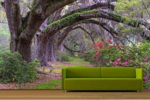 Hay thích phiêu lưu trong rừng cây cổ thụ.