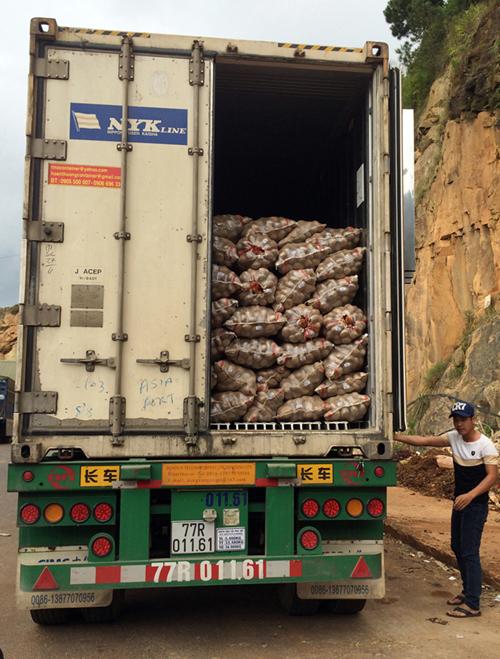 Mỗi vụ, hàng ngàn tấn khoai tây Trung Quốc được chở về Đà Lạt để mông má.