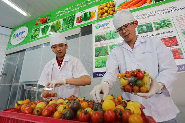 Cà chua sản xuất theo quy trình công nghệ cao được đóng hộp theo quy cách - Ảnh: M.VINH