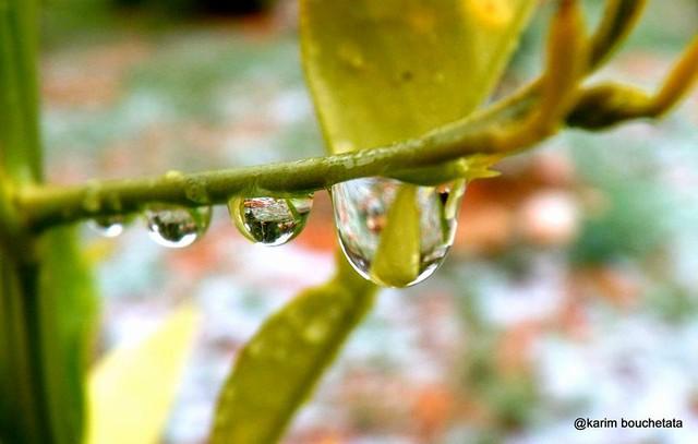 Những giọt nước hiếm hoi tan ra từ tuyết.