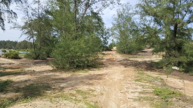 Để vào được khu dự án, chúng tôi phải xuyên qua một khu rừng dương âm u, nhiều con đường quy gập ghềnh...