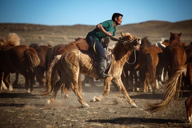 Nhiều thanh niên Mông Cổ không còn mặn mà với cuộc sống du mục.