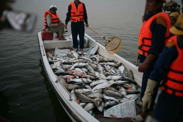 Nguyên nhân cá chết hàng loạt, bất thường được xác định là do thiếu ô xy
