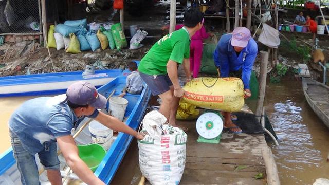 Cân cua đồng của người dân Campuchia mang xuống bán - Ảnh: BỬU ĐẤU