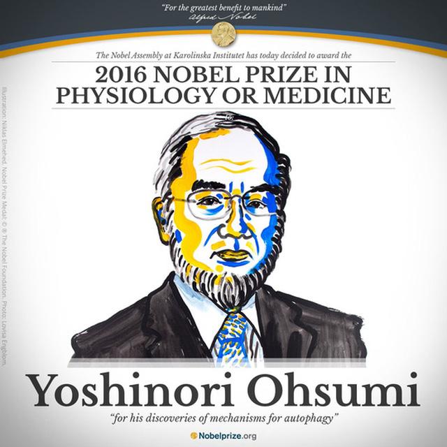 Giải Nobel Y học mở đầu mùa Nobel năm 2016. Ảnh: Nobelprize.org