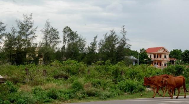 Hàng chục công trình xây dựng tại bãi tắm Cửa Tùng phải dở dang, cỏ mọc um tùm vì vướng quy hoạch – Ảnh: QUỐC NAM