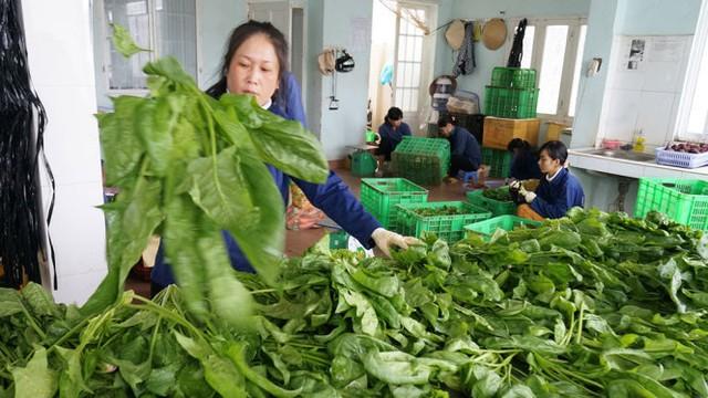 Giá rau tại Đà Lạt tăng mạnh do sản lượng giảm sút lại thêm áp lực tăng hàng cho miền Trung - Ảnh: M.VINH