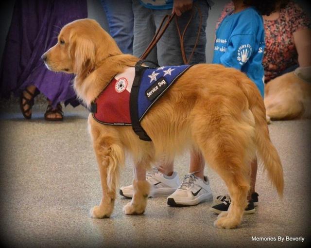 Những chú chó đã giúp nhiều các em nhỏ mắc chứng tự kỷ tìm lại được cuộc sống.