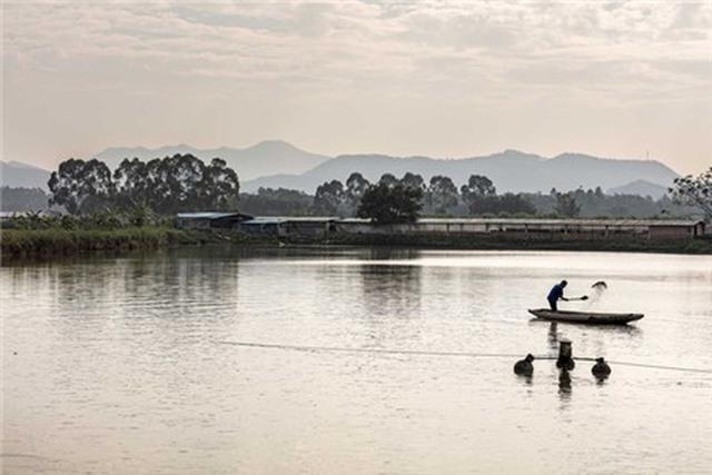 Nông dân Trung Quốc thường trộn rất nhiều kháng sinh vào thức ăn chăn nuôi
