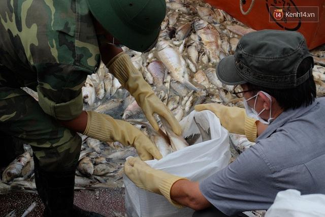 Lực lượng chức năng vẫn nỗ lực vớt cá chết.