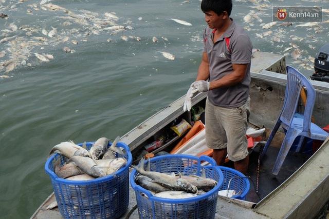 Các loại cá chết khá to, khoảng 3, 4 kg.