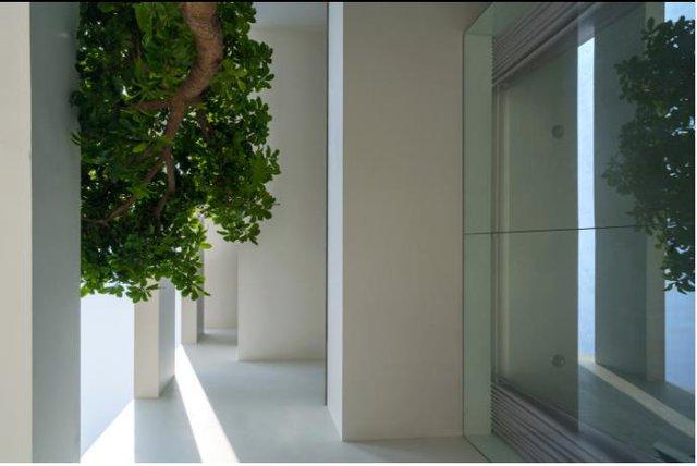 Để tận dụng tối đa ánh sáng, chủ ngôi nhà đã lựa chọn những bức tường kính trong suốt thay vì tường gạch bí bách ở toàn bộ phần mặt tiền cũng như bên trong căn nhà.
