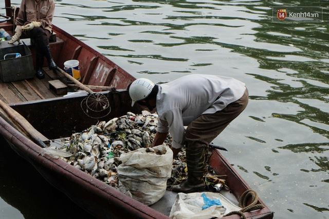 Cá vớt kèm theo nhiều rác thải, cua ốc cũng bị chết nổi rất nhiều.