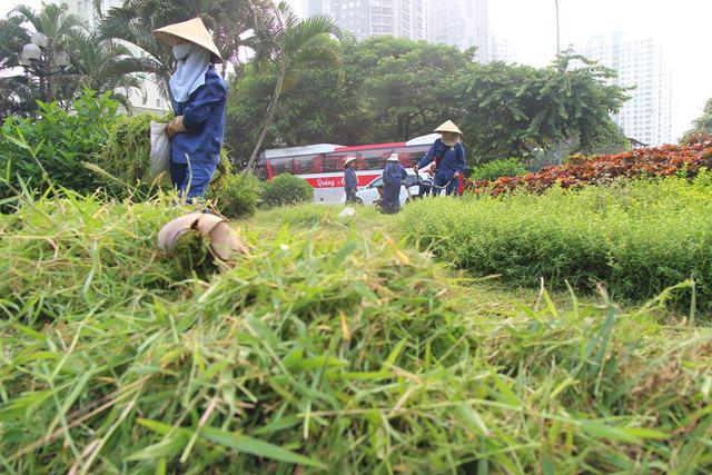 Những cây cỏ mọc um tùm đang được làm sạch